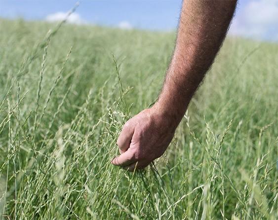 Mano en el campo
