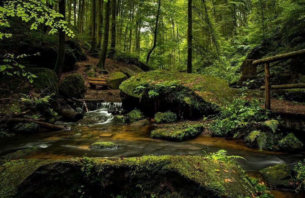 Nuestros bosques en primavera