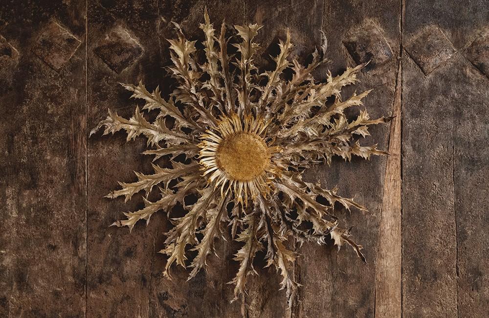 Eguzkilore, la leyenda de la planta protectora